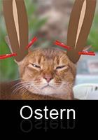 Osterkatze